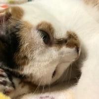 ココ寝ぼける。