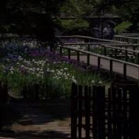 舞鶴公園にて