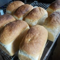 稲こきだ!ていうのに、パン作りかい?