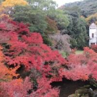 紅葉とモネの絵