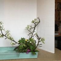 写景 自然 梨 アジサイ シダ 水仙 ピンクの花
