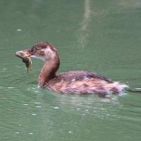 山崎川の生き物たち