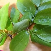 美味しい柿の葉の巻