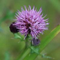 樫原湿原の野草(2)