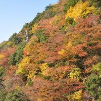 白水の滝付近の紅葉