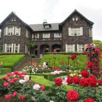 旧古河庭園と日比谷公園のバラ