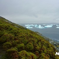 韓国と緑の南極