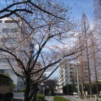 井上陽水 『桜三月散歩道』