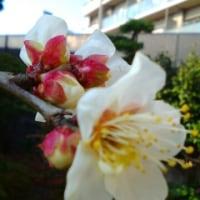 1月21日の花