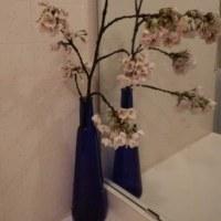 桜の枝を拾う