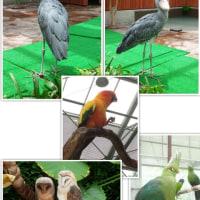 平日の掛川花鳥園に行ってみた♪
