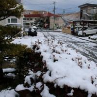 つれづれなるままに  2355 雪の到来
