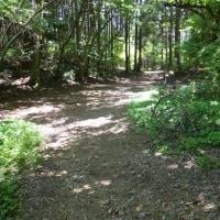 ダイヤモンドトレイル、紀泉山脈を歩く  滝畑ダムから岩湧山経由紀見峠まで新緑の道を歩く 2017年5月28日 その2
