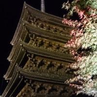 東寺 紅葉夜間ライトアップ
