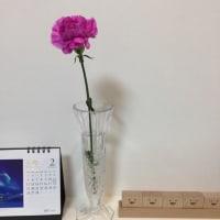 今週のお花と…