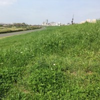 淀川河川敷、階段ジョグ