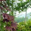 ガーデンカフェ 花伝舎(庭編) ~長野市~