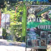さすらいの風景 コーヒー園