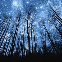 高天原「心」にはいくつもの鎮守の森があります。