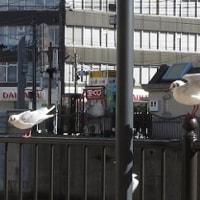 久しぶりの横浜は「信頼」で暖かい?けど・・・厳寒の候・・・