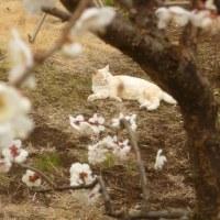 八の猫白血病