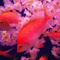 下田海中水族館に春が来た!