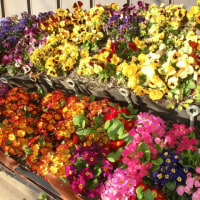 花の じゅうたん
