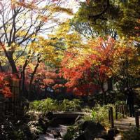 横浜公園と日本大通りの紅葉、きれいでした。