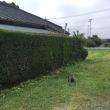 新盆を控えた庭木の刈り込み 茨城 利根