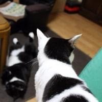 横転する猫と見学する猫ww
