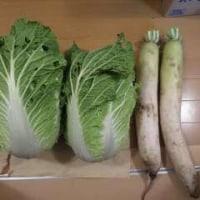 最後の野菜