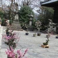 その場考学との徘徊(20)梅と桜の共演