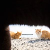 クロネコが目の前を横切った! @相島のネコたち