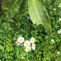 春の野花〜可愛いですね