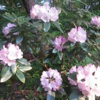 5/22(月)のイキメンニュース~暮らし&身近な法律・判例の情報