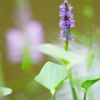 ★栃木の植物園大柿花山と益子のひまわり