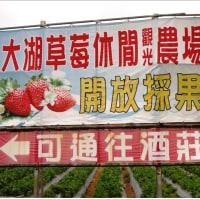 台湾の大湖という場所は苺の村
