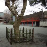 百日紅に竹柵