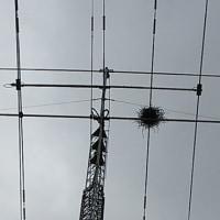 アンテナに巣が