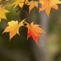 日本庭園の秋(Ⅴ)