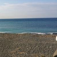 今年最初のビーチクリーン