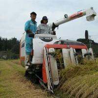 コンバイン収穫作業を体験