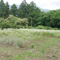 今季2度目の草刈り@山梨の別荘