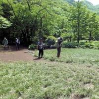 ミヤマ咲く平治岳