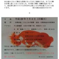 三歳魚研究会&黒子分譲会