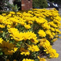 庭も花いっぱい