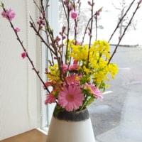 春を待つ花、春を待つブロッコリー?