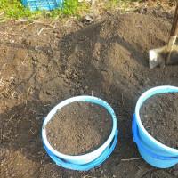 各種ポット苗に土を足す