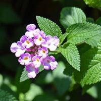 ポエム154 『花も歌舞伎も七変化』