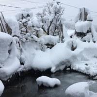 外は雪。只見52センチの積雪。
